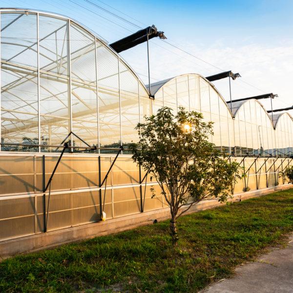 Développement des plantes grâce à EcoCooling